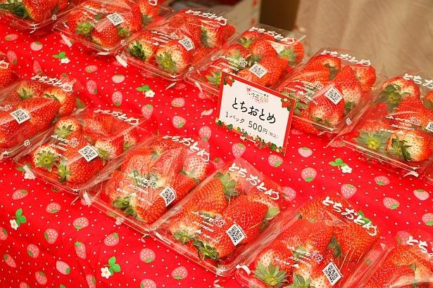 【写真を見る】「いちご王国・栃木」では、「とちおとめ」「スカイベリー」「とちひめ」「なつおとめ」などが栽培されている