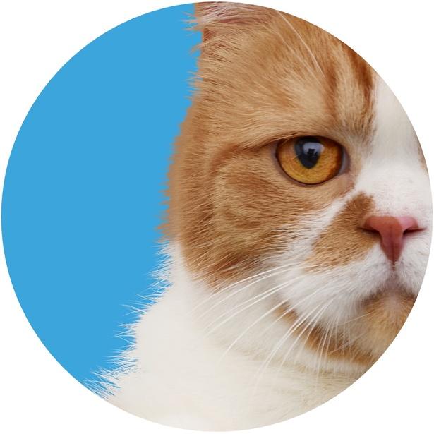 二つの世界の様子を猫目線で、写真や動画付きで投稿するSNSも!