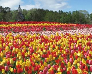 広大な花畑はすべてがフォトジェニック!/「伊良湖菜の花ガーデン」