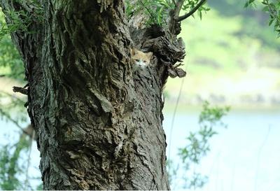 """""""早朝、樹上で目を覚ました子がこちらを見つめます"""""""