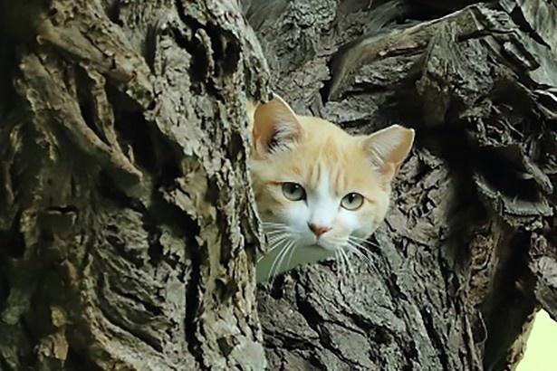 """「地域猫写真展」の被写体は""""飼い主のいない猫""""たち"""