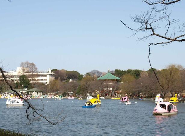 ボート池で水上からの眺めも楽しみたい。料金はサイクルボートの場合、1台30分あたり600円 /上野恩賜公園