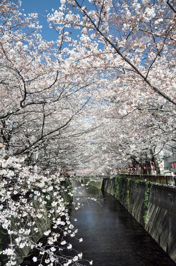 桜と共に、周辺のおしゃれなカフェやショップも楽しんで/目黒川