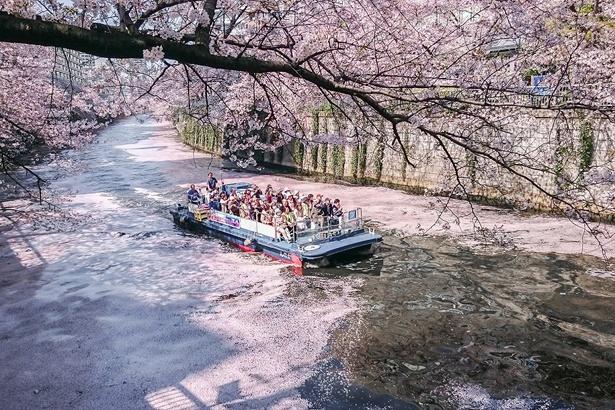 クルーズ船は品川「天王洲ヤマツピア」から出航/目黒川