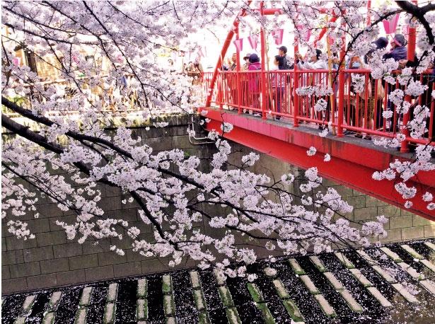 赤いアーチ形の中の橋。ドラマのロケ地でも有名/目黒川