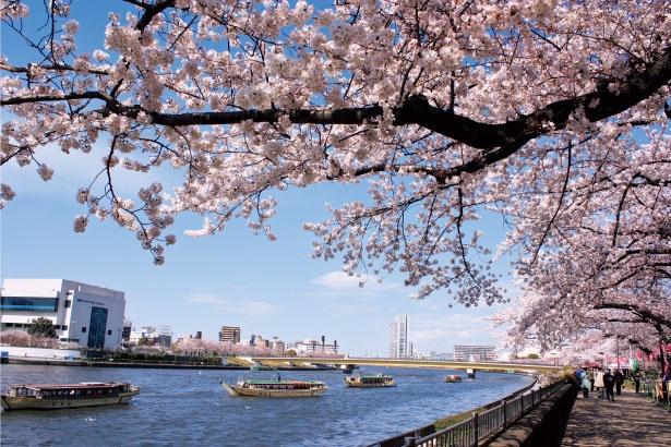 「隅田公園」のお花見(浅草)