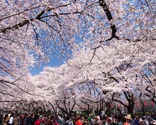 都心で春の絶景を堪能!東京23区内のお花見スポット10選