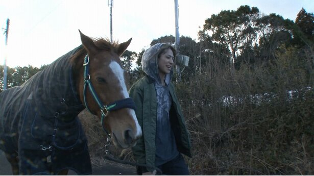 【写真を見る】白井家名物・馬とのお散歩風景!