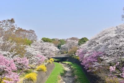 【写真を見る】花々のコラボが美しい「ふれあい橋」周辺。 ほか、園内に流れる川沿いに見どころが多い/国営昭和記念公園