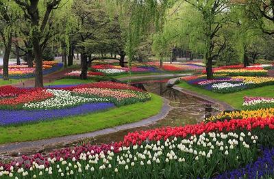「渓流広場」に咲く約22万球のチューリップも見逃せない/国営昭和記念公園