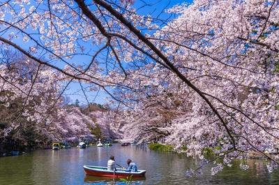 ボートに乗ってお花見を満喫!ボートの営業時間は10:00~17:50、料金はローボート700円/60分(定員3人)など/井の頭恩賜公園