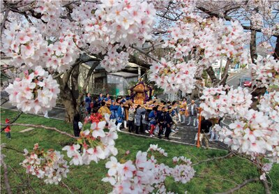 福生市で一番の桜の名所。満開の桜が頭上を覆い尽くす/多摩川堤防沿い ふっさ桜並木