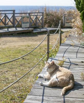 【写真を見る】城ヶ島灯台にいるネコ。海を見渡せる高台でのんびり