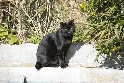 城ヶ島灯台で黒ネコ発見!寒い日は日向でポカポカ