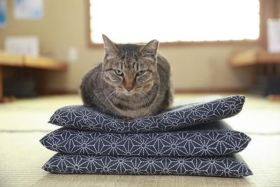 いつもは店の外にいるミーコだが、営業前の店内で撮影中に急に座布団にチョコンと座りだした