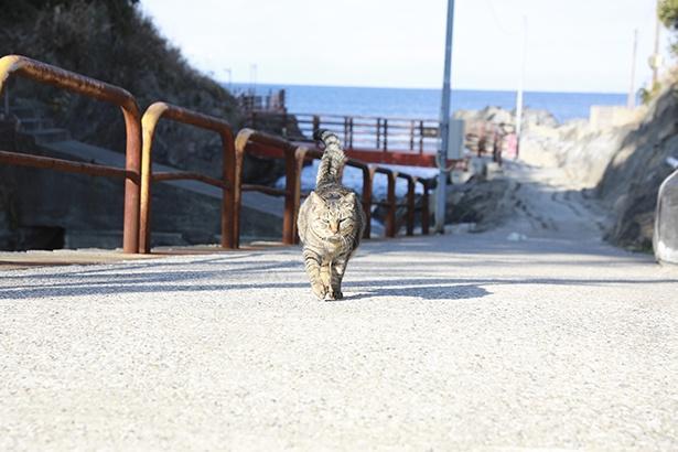 朝は店の奥にある海まで散歩にいくことも