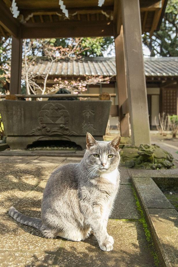 奥津宮の龍宮近くにある手水舎付近にいるネコ
