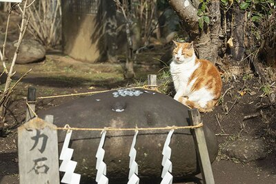 力石の奥でじっとしているネコ。神様のパワーをもらっているニャ