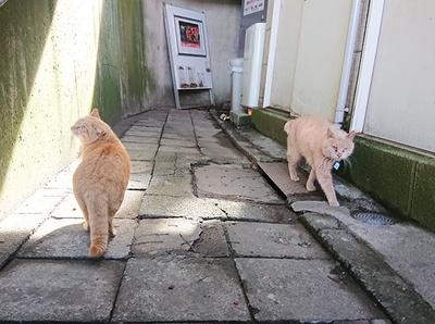 江の島エスカー付近ですれ違うネコたち。あいさつはしなくていいのかニャ?