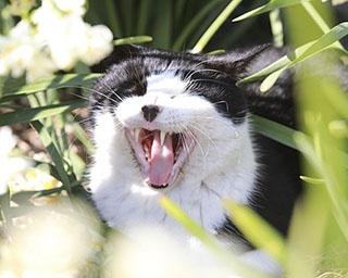 居心地いいニャ~。城ヶ島&江の島のネコアイランドで暮らすネコに会いに行こう!