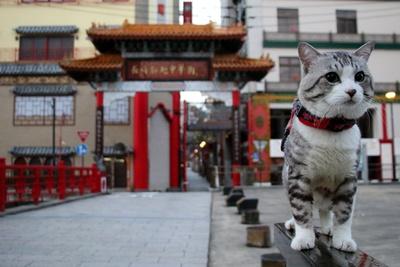 旅猫ニャン吉が行く!日本絶景旅@長崎