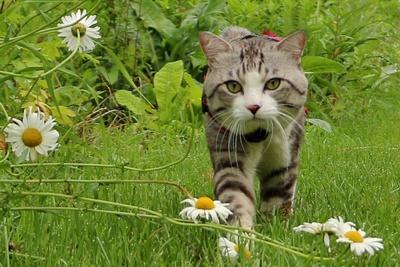 旅猫ニャン吉が行く!日本絶景旅@北海道
