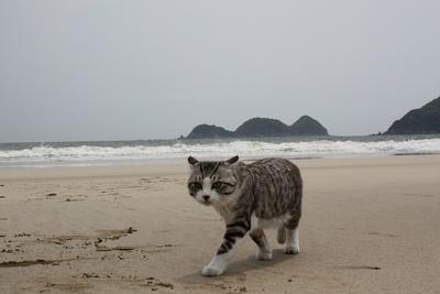 旅猫ニャン吉が行く!日本絶景旅@宮崎