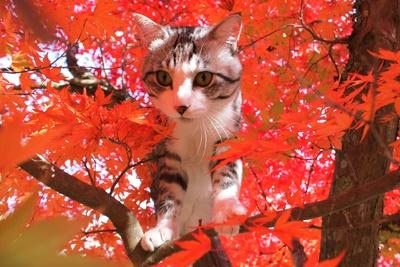 旅猫ニャン吉が行く!日本絶景旅@大分