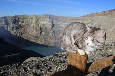 旅猫ニャン吉が行く!日本絶景旅@熊本