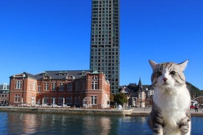 旅猫ニャン吉が行く!日本絶景旅@福岡