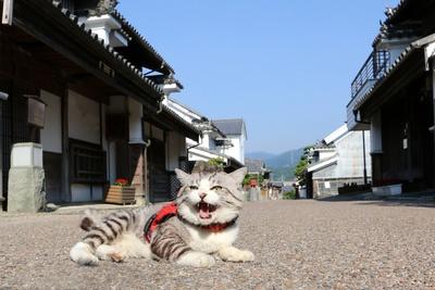 旅猫ニャン吉が行く!日本絶景旅@徳島