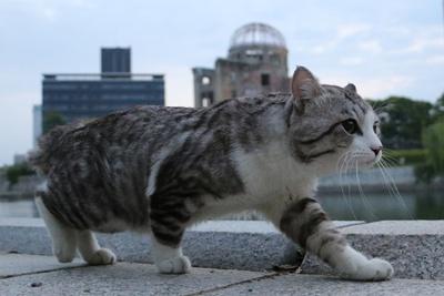 旅猫ニャン吉が行く!日本絶景旅@広島