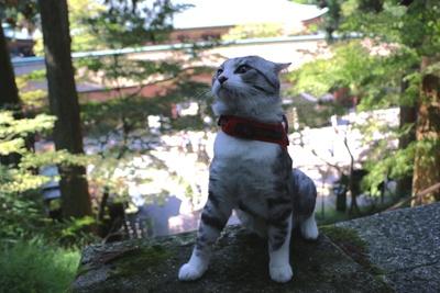 旅猫ニャン吉が行く!日本絶景旅@滋賀
