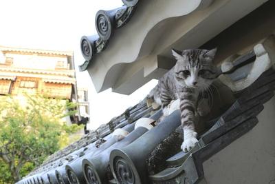 旅猫ニャン吉が行く!日本絶景旅@愛媛