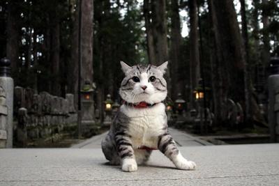 旅猫ニャン吉が行く!日本絶景旅@和歌山