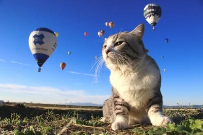 旅猫ニャン吉が行く!日本絶景旅@佐賀