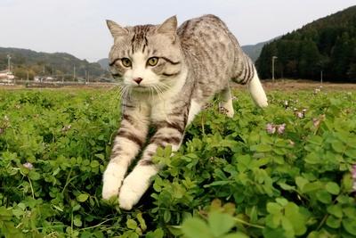 旅猫ニャン吉が行く!日本絶景旅@鹿児島