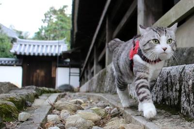 旅猫ニャン吉が行く!日本絶景旅@奈良
