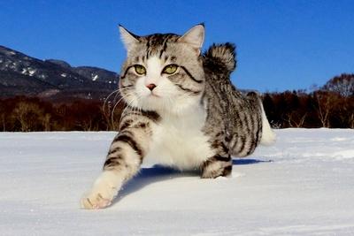 旅猫ニャン吉が行く!日本絶景旅@長野