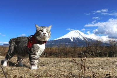 旅猫ニャン吉が行く!日本絶景旅@静岡