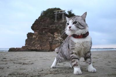 旅猫ニャン吉が行く!日本絶景旅@島根