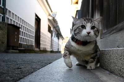 旅猫ニャン吉が行く!日本絶景旅@岡山