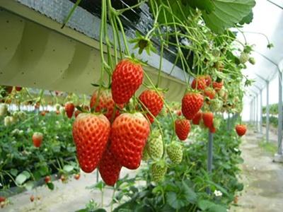 収穫できる品種や栽培方式は時期により異なる