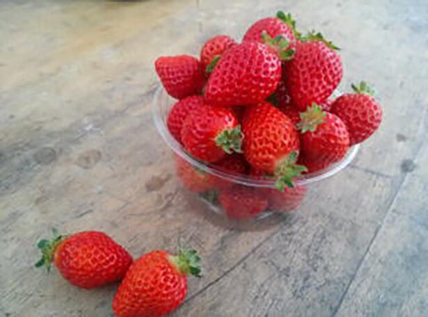 ハウス内で摘み取り可能なフルーツなので雨天でも大丈夫