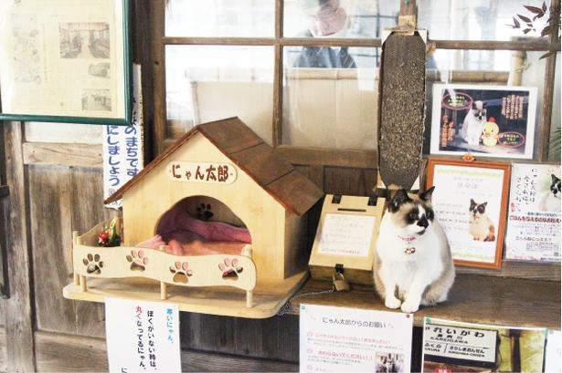 嘉例川観光大使も務める「にゃん太郎」に会えるかも