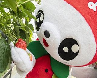 神奈川でイチゴ狩り! イチゴ尽くしのパラダイス、海老名へ!