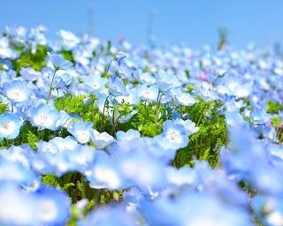 今見に行くならこの花!3~5月が見頃の花カレンダー