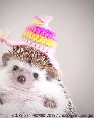 帽子がよくお似合いで!