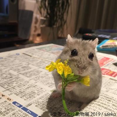えっ!そのお花くれるの...?
