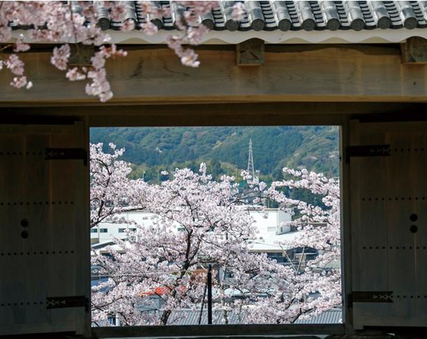 臼杵城 / 城跡にある門から、桜の景観を切り取ったような美しい眺めが楽しめる